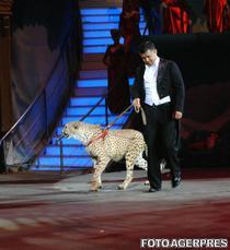 Animale la circ