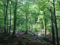 Parcul National Cozia