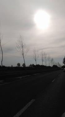 Arbori uscati Dambovita