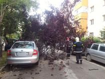 Copaci cazuti