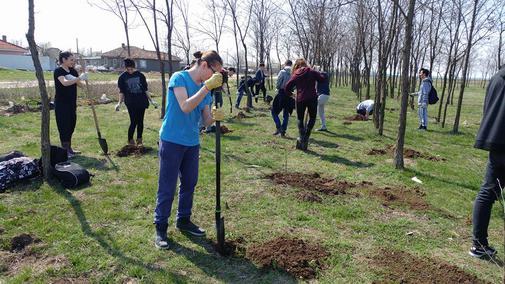 Plantare de arbori in perdeaua forestiera de la Roseti