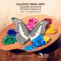 Expozitia 'Culorile prin aripi'