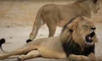 Leul Xanda, ucis de ca si tatal sau, Cecil