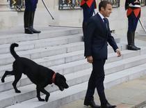 Macron si cainele Nemo