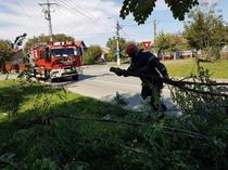 Pompier ISU indepartand un copac cazut