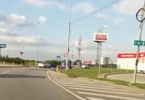 Cangur filmat pe strazile din Timisoara
