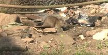 Ciuma se raspandeste in orasele din Madagascar