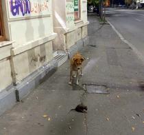 Un caine maidanez si un sobolan, pe trotuar in Bucuresti
