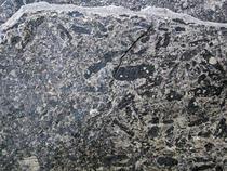 Fosilele cu o vechime de 3,5 miliarde de ani, identificate in Australia