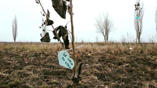 Adopta un copac (1)