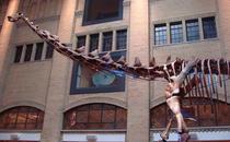 O noua specie de dinozaur, descoperita in Africa