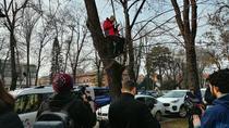Protestatar urcat in pom