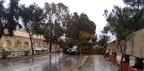 Sofer roman ucis de caderea unui copac in Malta