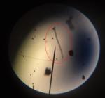 Microorganisme