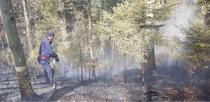 Foc într-o pdure bcuan care arde de sâmbt
