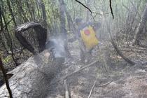 Incendiu Domogled (foto arhiva)