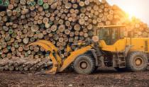 Legislatia forestiera
