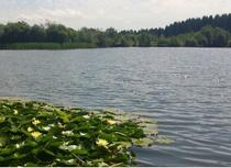 Royal Forest of Dean Angling Club