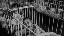In Orfelinatul Groazei din Sireat au murit, in total, 1.500 de copii