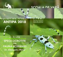Specii ocrotite din fauna Romaniei