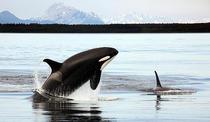 Balen Uciga