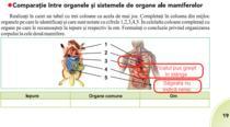 Organele omului, indicate gresit in manualul de Biologie de clasa a VI a