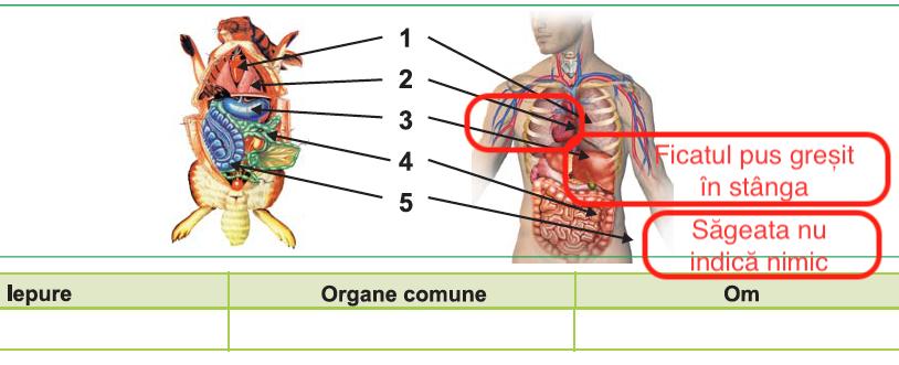 FOTO Catastrofa din manual. Biologia de clasa a VI-a: Inima și ficatul sunt poziționate greșit n corp, elevii sunt ntrebați Cine şi cum se produce urina?