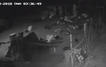 Reactia pasarilor in momentul seismului