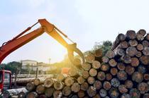 Analiza pietei lemnului rotund