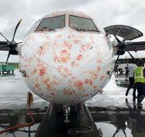 Avion care a lovit un stol de pasari