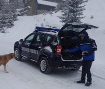Jandarmii si cateii