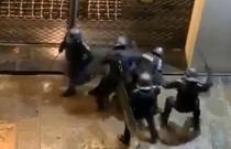 barbat batut de politistii francezi