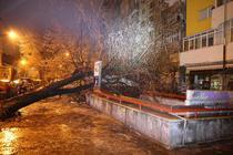 copac căzut la metrou Stefan Cel Mare