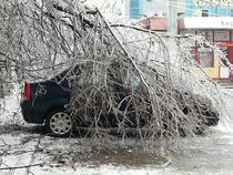 copac cazut peste masina