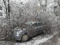 Arbore căzut