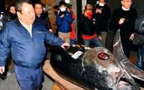 Pret record pentru un ton rosu