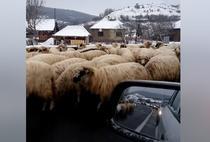 Turma de oi pe E81