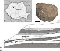 Locul unde au fost descoperite fragmentele de oua