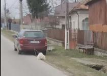 Caine tras de masina