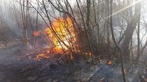 Incendiu de vegetatie