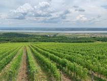 ferme viticole Drăgășani