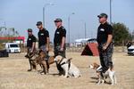 Echipe canine