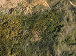 Fosile microbiene