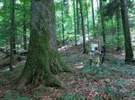 Pădure Românească