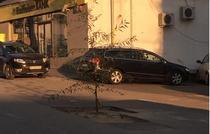 copac plantat in drum