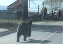 Urs in Victoria