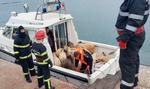 Numai 33 oi din 14.600 au fost salvate