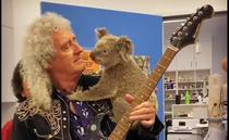 Brian May si koala