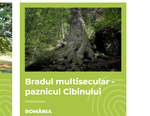 brad secular Romania