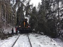 Copaci pe calea ferata